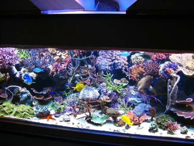 Zipa meerwasser zierfische aquarien aquaristik korallen for Salzwasser aquarium fische